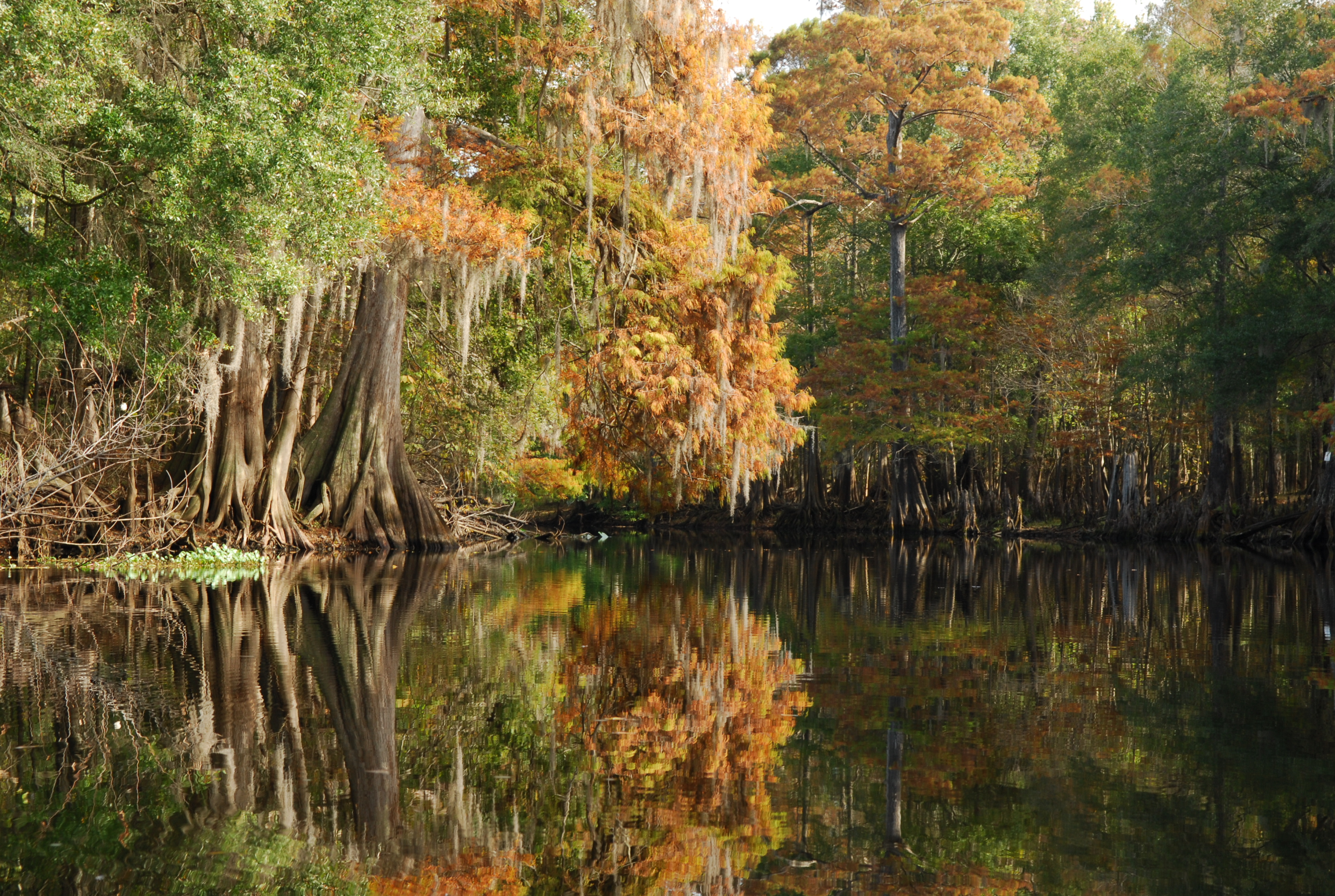 Withlacoochee River autumn