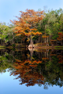 Autumn River Relections
