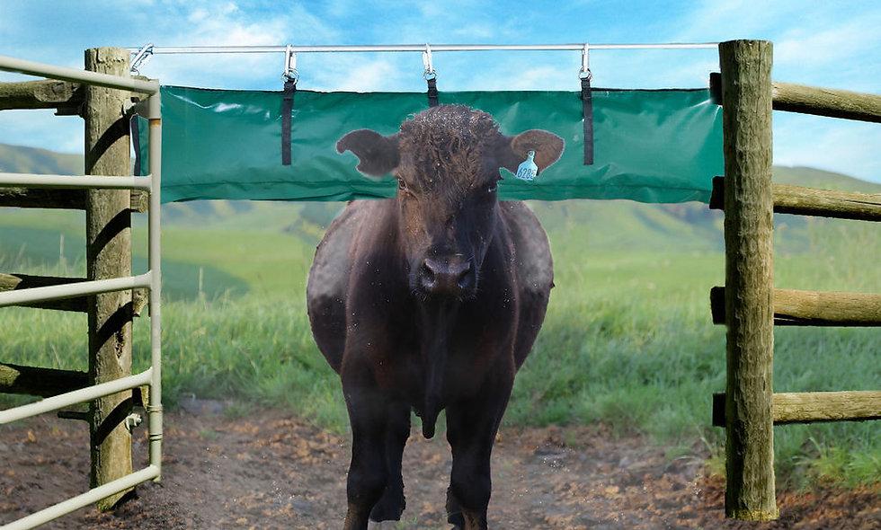 Cow underneath the DE Backrub