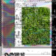 RAINBOW_GRASS.jpg