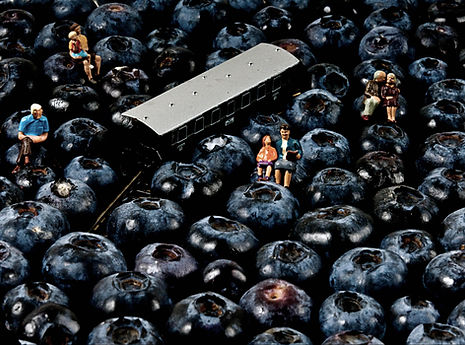 bluberries definitiva2 copy.jpg