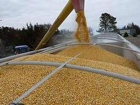 cornloading.jpg