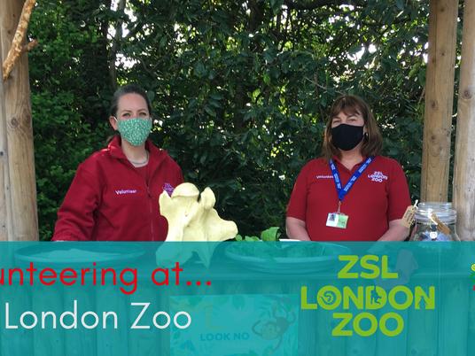 Volunteering at ZSL London Zoo