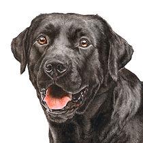 Fine art dog paintings