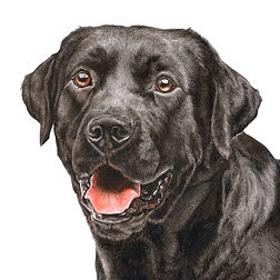 Fine art dog paintings