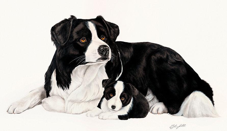 Border Collie fine art dog painting
