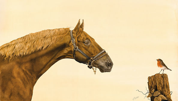 American Saddlebred - New Pop Up.jpg
