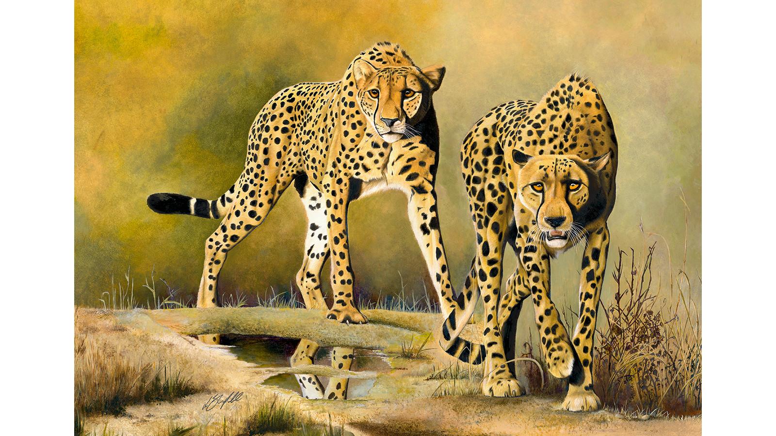 Cheetah Brothers  - New Pop Up.jpg