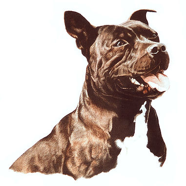 Staffordshire Bull Terrier fine art dog watercolour painting