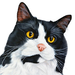 Fine art cat paintings