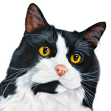 Black and whte cat fine art cat painting