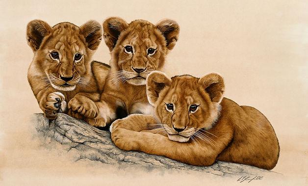 Lion%20Cubs%20-%20New%20Pop%20Up%20-%20e