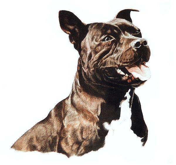 Staffordshire Bull Terrier fine art dog watercolour painting
