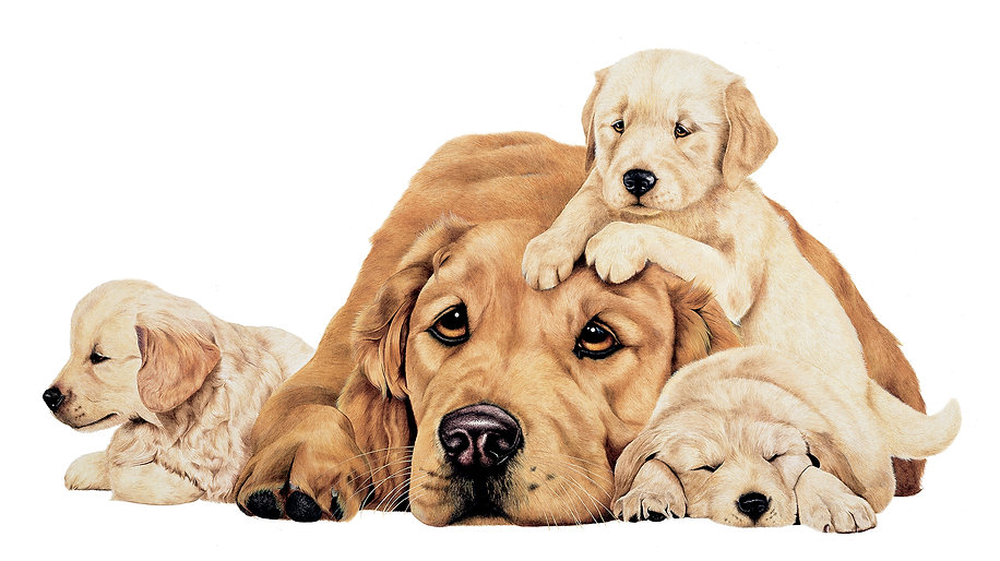 Golden Retreivers fine art dog painting