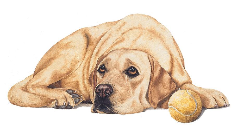 Golden Yellow Labrador fine art dog painting