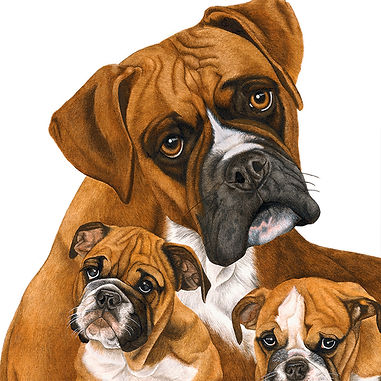 Boxers fine art dog painting