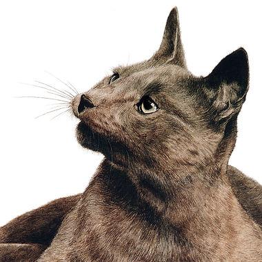 Burmese Cat fine art cat painting