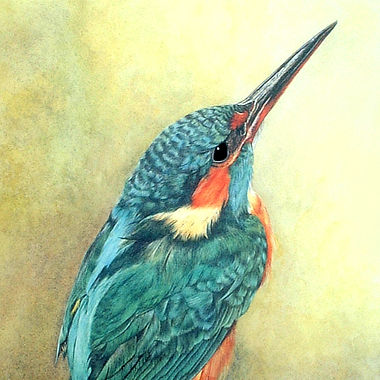 Kingfisher fine art British birds wildlife painting