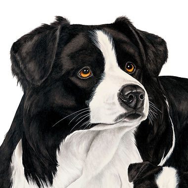 Border Collie fine art dog painting