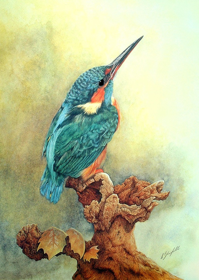 Kingfisher - New Pop Up.jpg