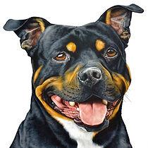 Commissioned animal portraits