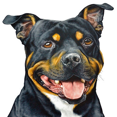 Staffordshire Bull Terrier dog fine watercolour art painting