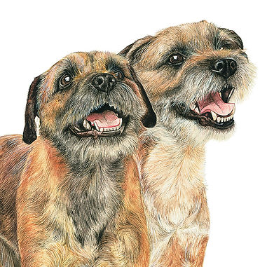 Border Terriers fine art dog painting