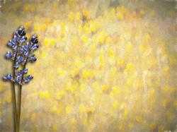Yellow Painting 1