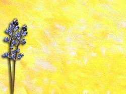 Yellow Painting 13