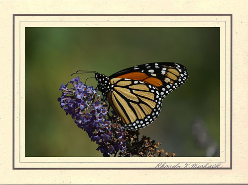 AB-1 Monarch Butterfly