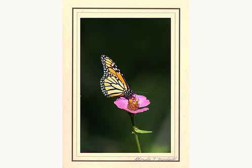 ABZ-1 Butterfly Zina Monarch