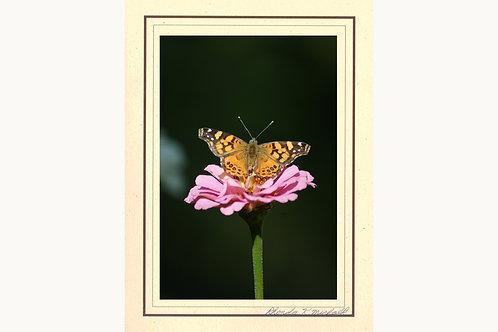 VFBZ-2 Butterfly CA Monarch