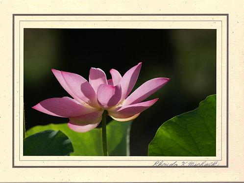 FL-1 Lotus