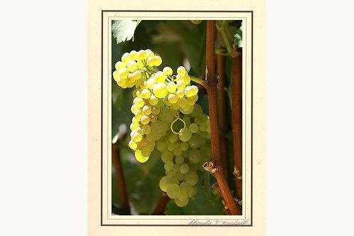GC-65 Chardonnay