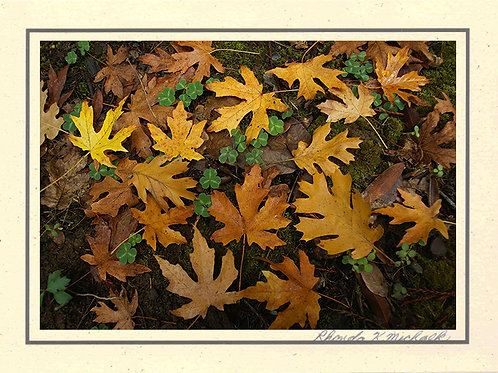 GV-32 Fall Leaves
