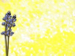 Yellow Painting 12