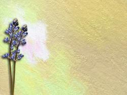 Yellow Painting 15
