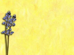 Yellow Painting 8