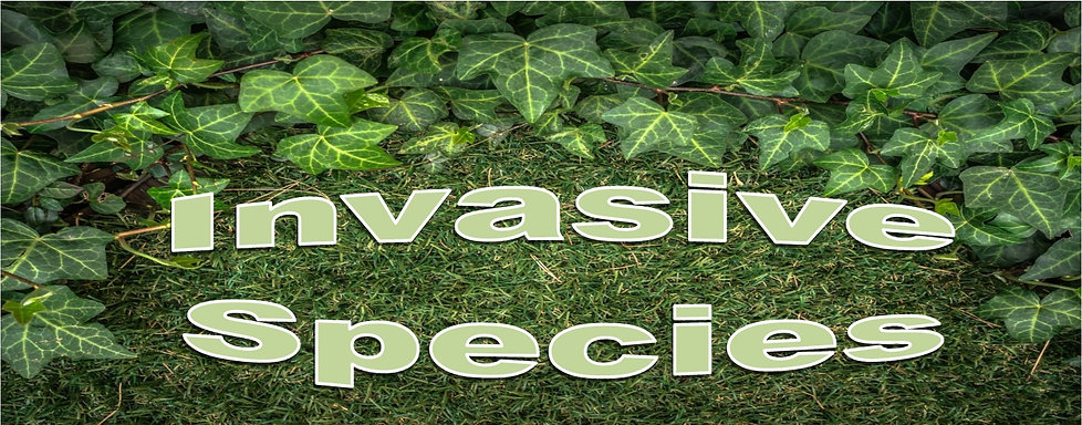 Invasive Species headline narrow.jpg