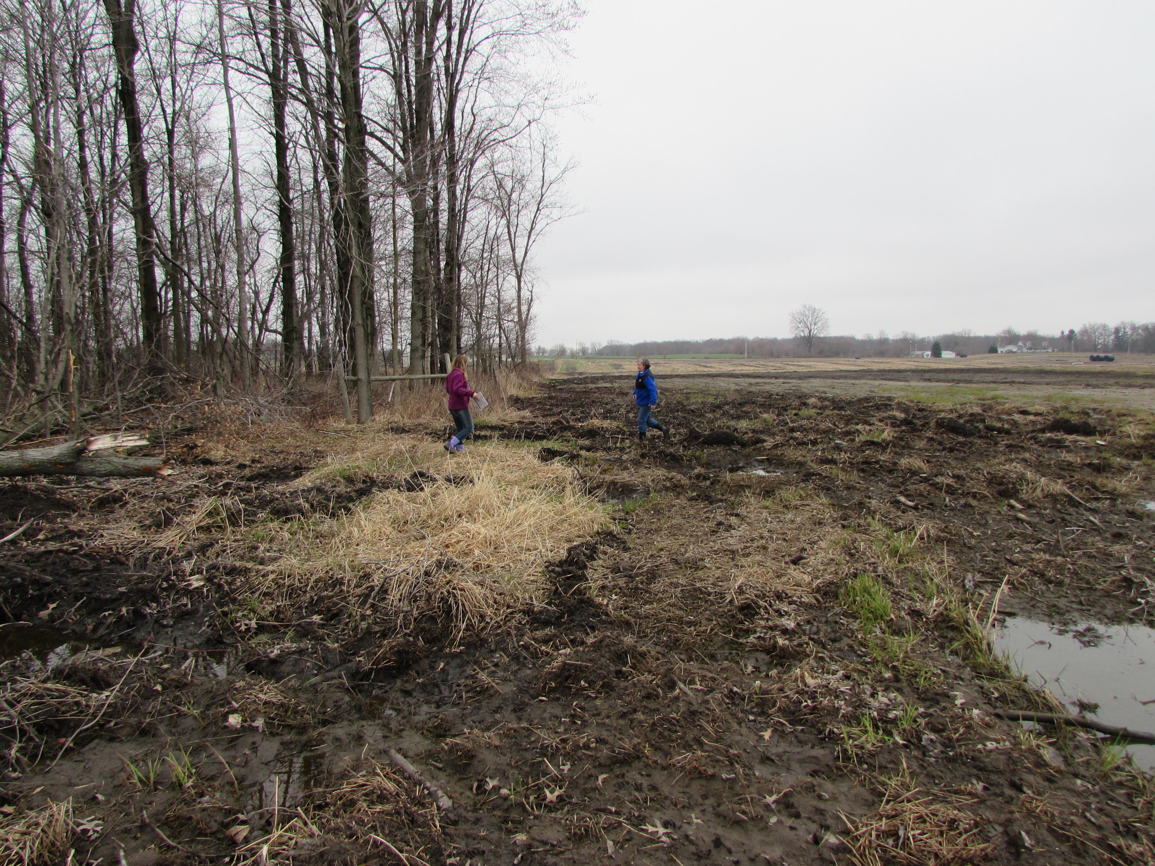 Wetland Determination