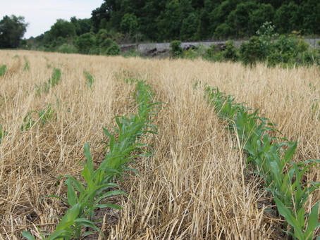 Soil Conservation Remains Strong in Indiana