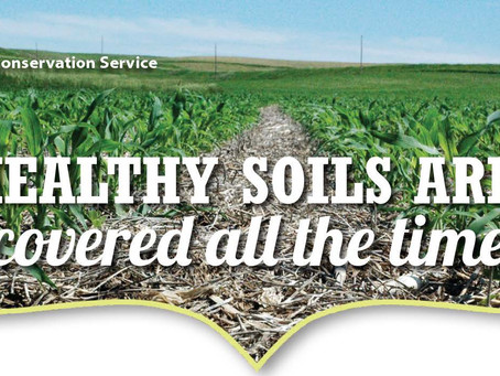 Healthy Soils Are: covered all the time