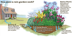 What is a Raingarden?