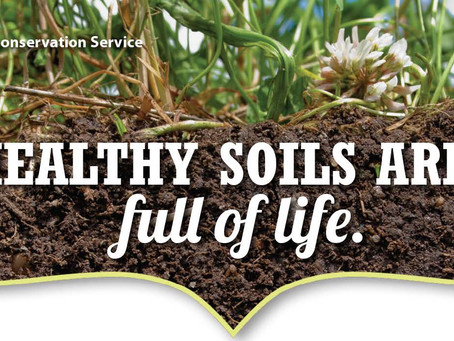 Healthy Soils are: full of life