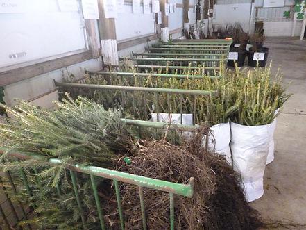 Tree Sale 2015