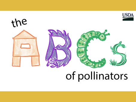 Conserve Indiana: Native plants can help create a pollinator-friendly landscape