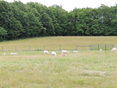 2016 Pasture Walks