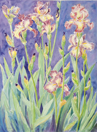 IRISES IN ROYAL BLUE I