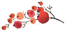 AdobeStock_238190520_Berries 1.jpg