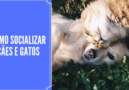 Como socializar cães e gatos?
